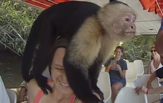 Costa Rica Wildlife Luxury Costa Rica Vacations with Pura Vida House