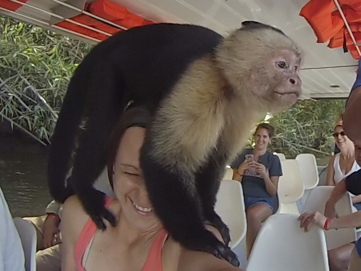 Interacting with Costa Rica Wildlife