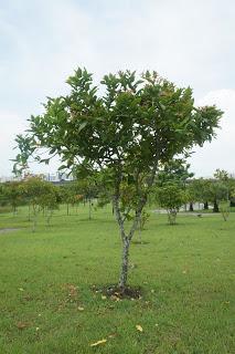 Costa Rica Villa Owner's Chronicles: Post 1, Garden