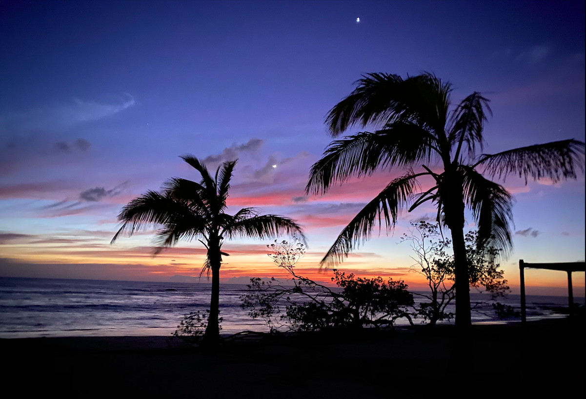 beautiful night sky and palm trees by the beach