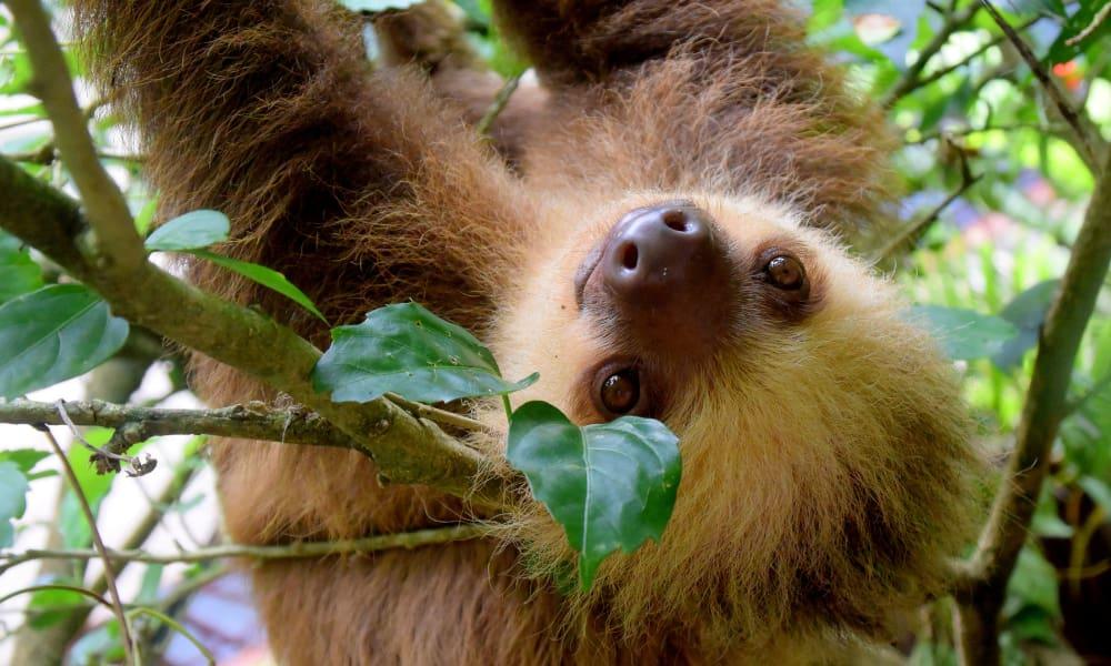 Sloth Excursion in Costa Rica